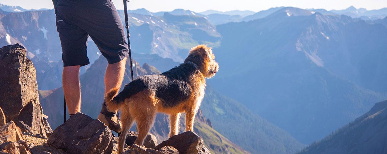 adventure-dog-dirtbagdreams.com