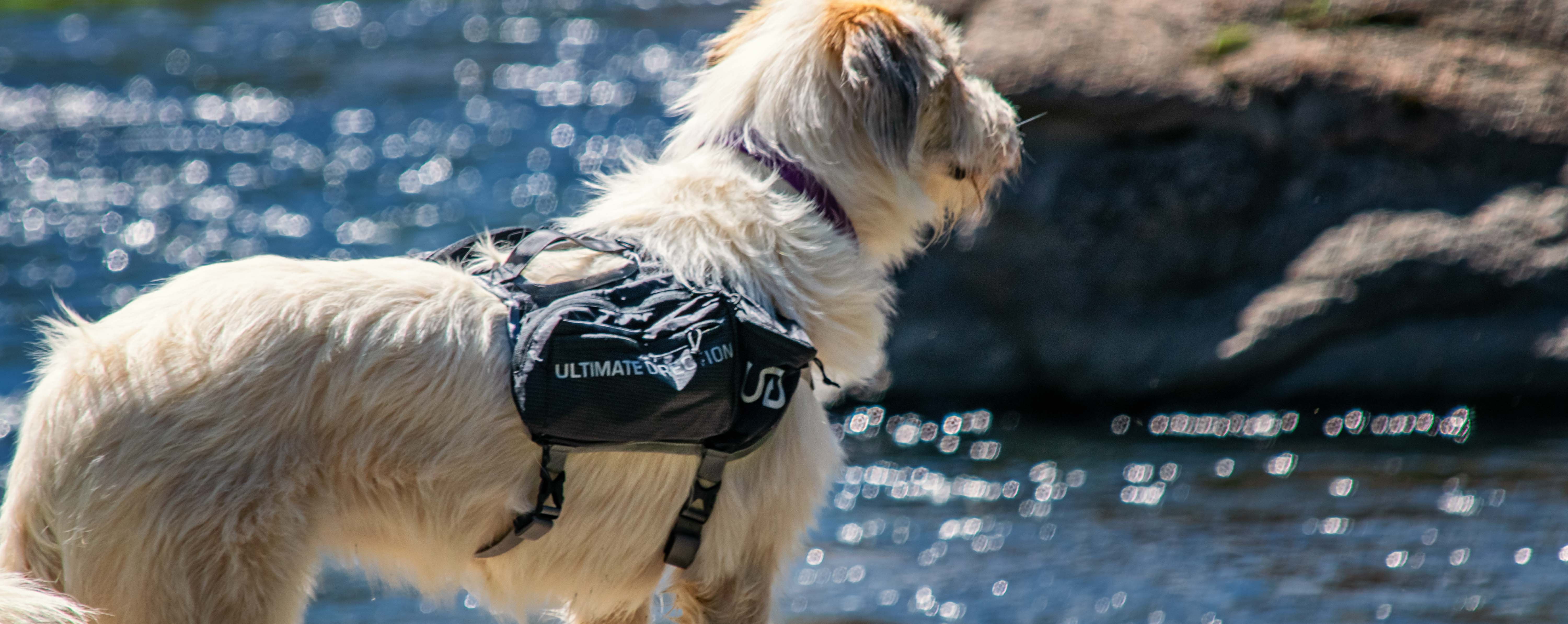 ultimate-direction-dog-vest-review-dirtbagdreams.com